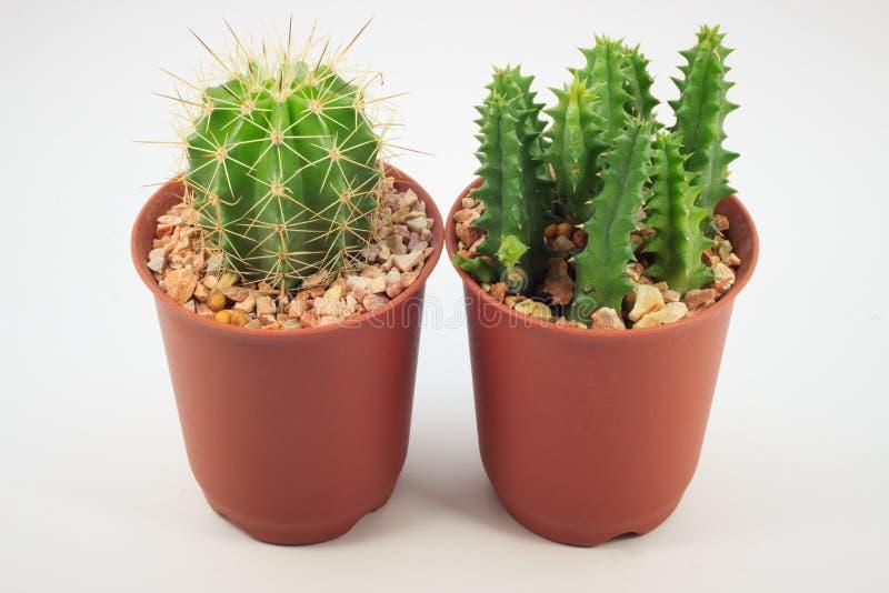 Cactus en crisoles foto de archivo libre de regalías