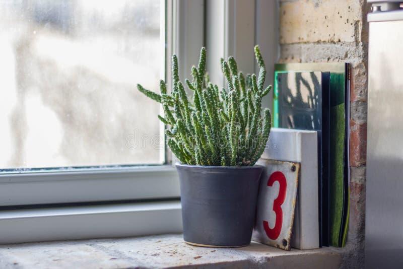 Cactus en el alféizar de ladrillos fotos de archivo