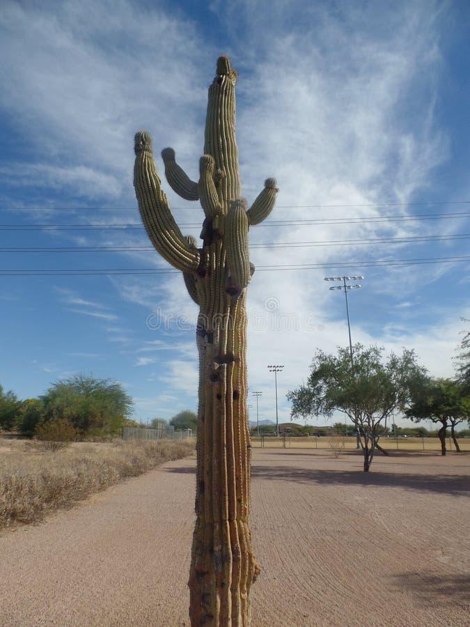 Cactus en el parque rojo de la montaña en Mesa Arizona fotografía de archivo libre de regalías