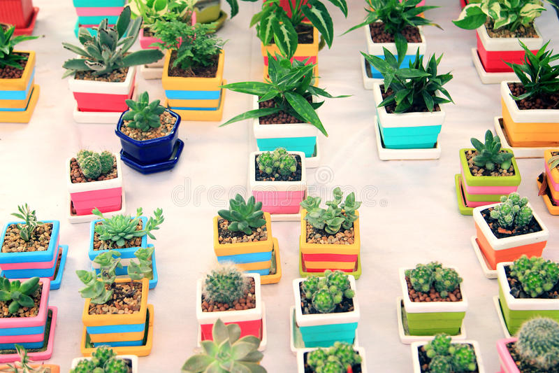 Cactus en el pote fotografía de archivo