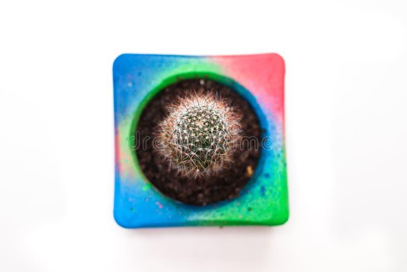 Cactus en el pote colorido foto de archivo libre de regalías