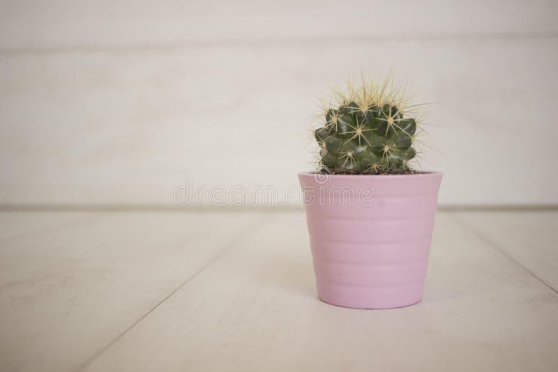 Cactus en el pote rosado fotografía de archivo