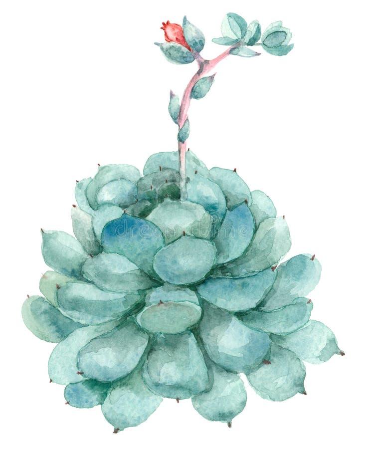 Cactus en flor stock de ilustración