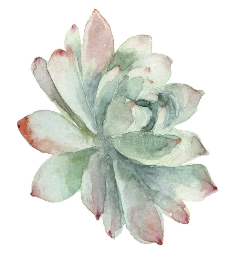 Cactus en flor libre illustration
