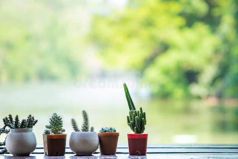 Cactus en gros plan sur le sidee de rivière de balcon Focu sélectif et doux photos stock
