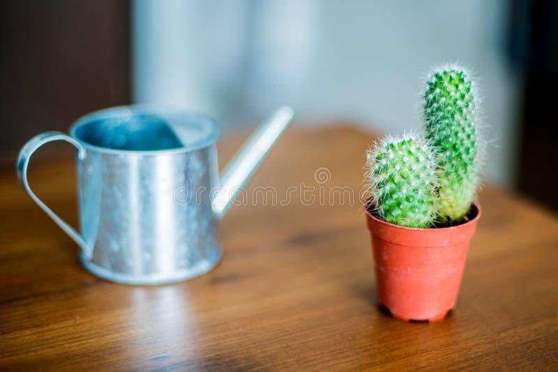 Cactus en het water geven hulpmiddel stock foto's