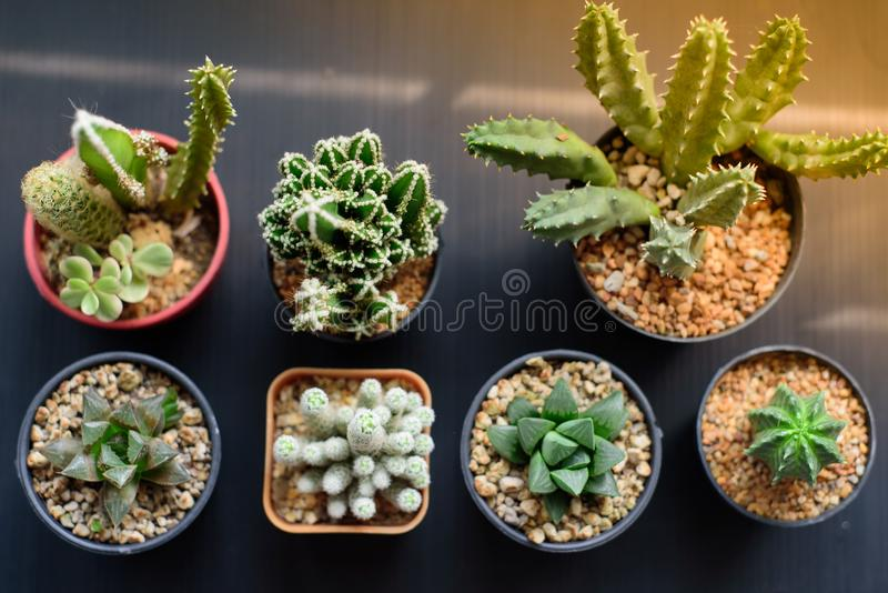 Cactus en la luz de la mañana fotos de archivo