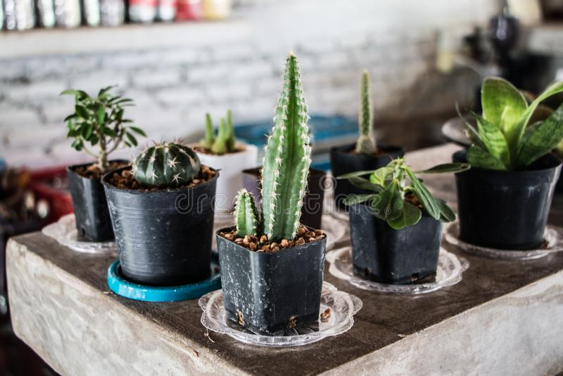 Cactus en nourriture dans Kanchanaburi photographie stock