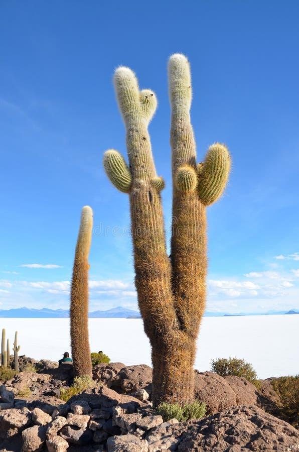 Cactus en planos de la sal de Uyuni en Bolivia foto de archivo