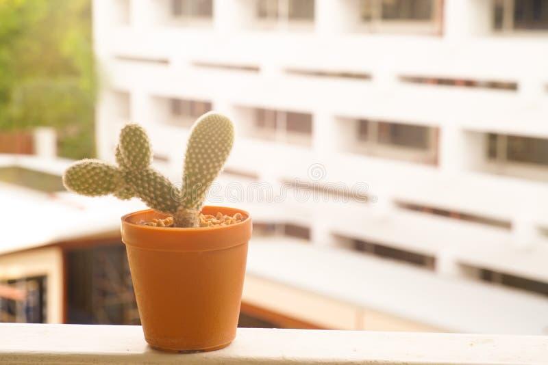Cactus en sol imagenes de archivo