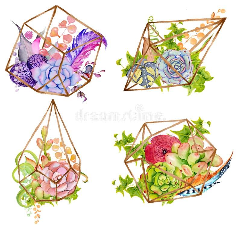 Cactus en succulente reeks met geometrische terrarium royalty-vrije illustratie