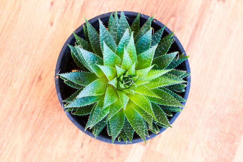 Cactus en Succulents stock fotografie