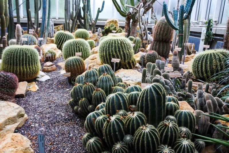 Cactus en un jardín botánico en Ginebra imagen de archivo libre de regalías