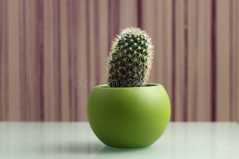 Cactus en un pote fotos de archivo
