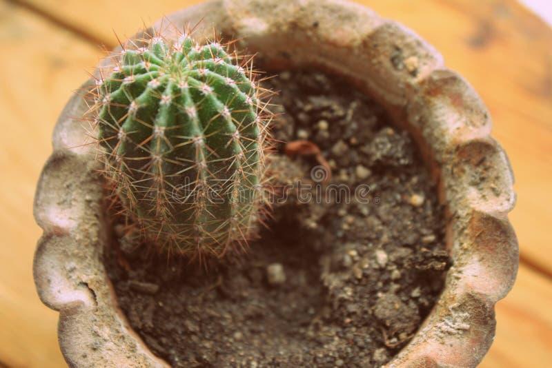 Cactus en un pote de arcilla foto de archivo libre de regalías