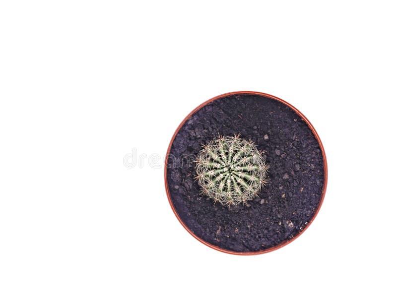 Cactus en una maceta aislada en una opinión superior del fondo blanco Primer foto de archivo