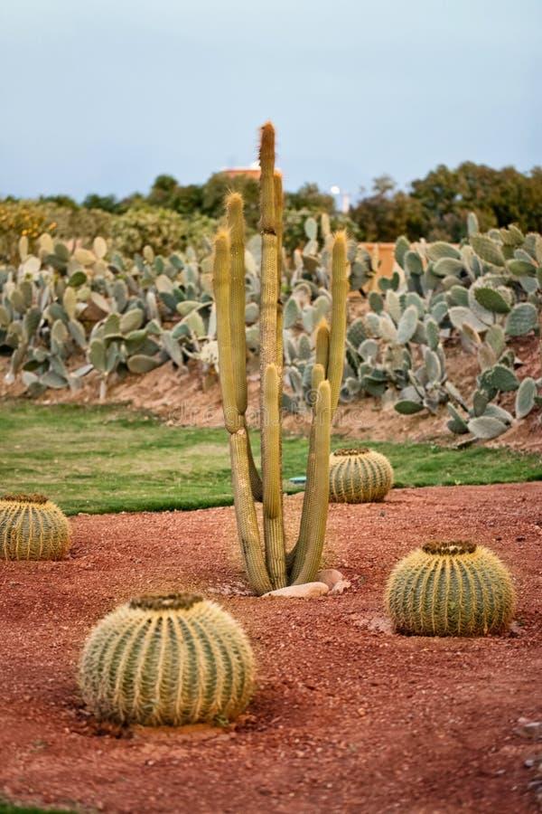 Cactus en Woestijn royalty-vrije stock afbeelding