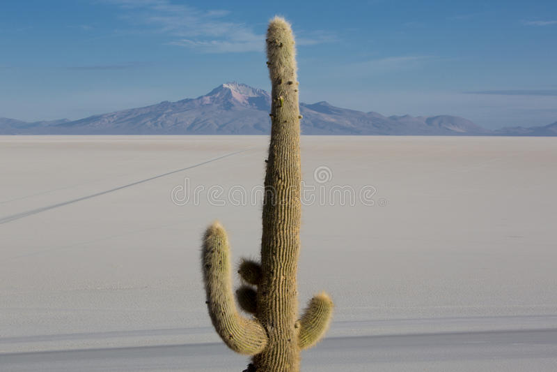 Cactus enorme y Salar de Uyuni con el cielo azul, Bolivia fotos de archivo