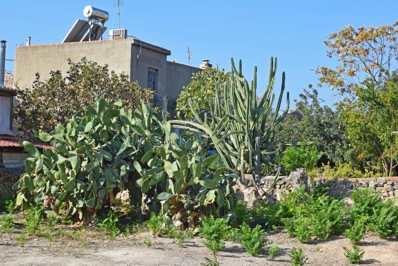 Cactus enormes en la yarda de una casa en una isla en Grecia imagenes de archivo