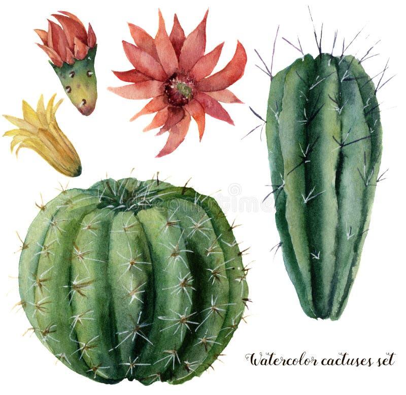 Cactus et fleurs d'aquarelle réglés Grusonii peint à la main de cierge et d'echinocactus avec la fleur rouge et jaune d'isolement illustration libre de droits