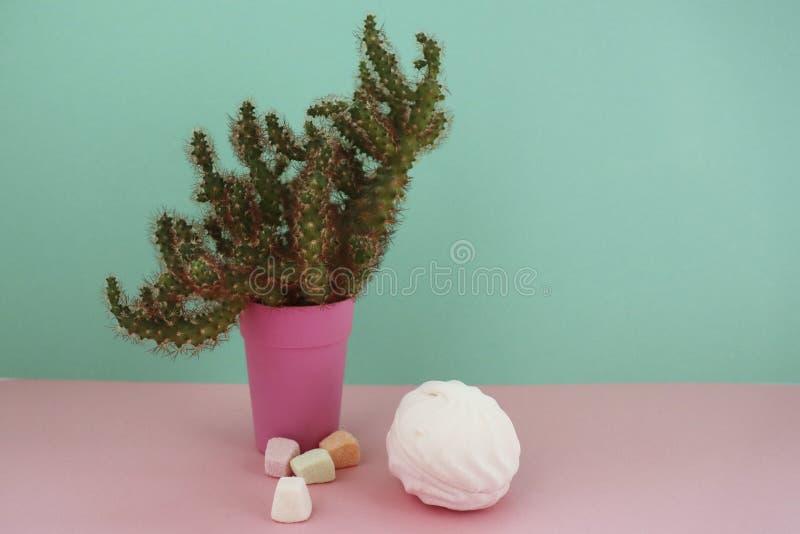 Cactus et guimauve Les cactus de plan rapproch? la vue de face dans le pot rose sur le fond en bon ?tat et rose image libre de droits