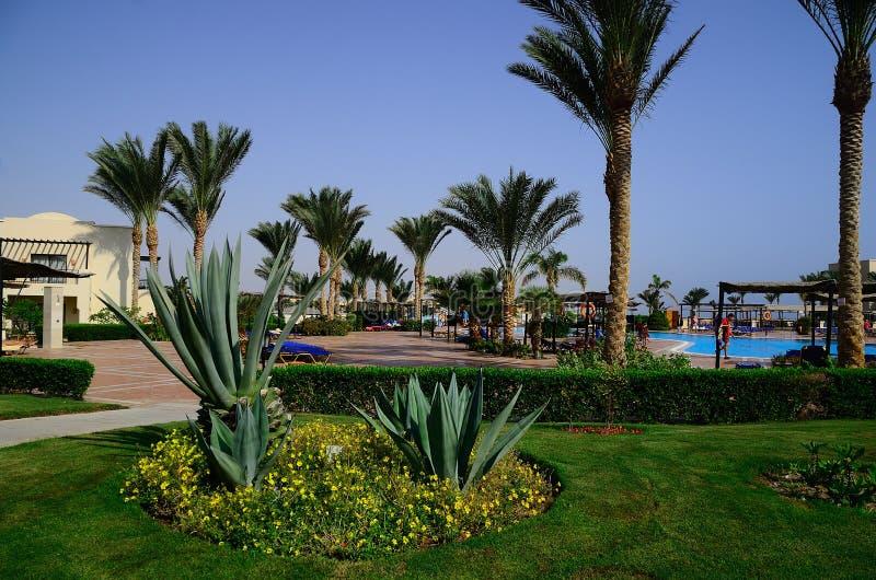 Cactus et palmiers à la piscine photographie stock libre de droits