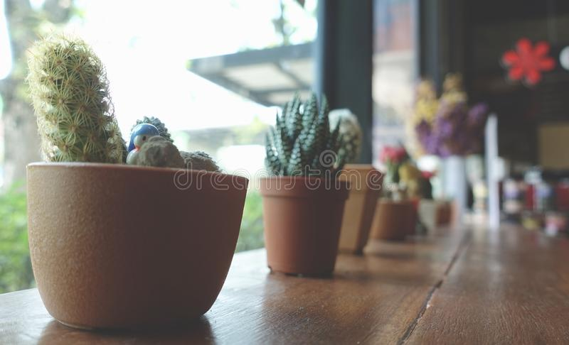 Cactus et petites plantes dans l'utilisation de pot de fleurs pour la décoration de conception intérieure dans le café de café images stock