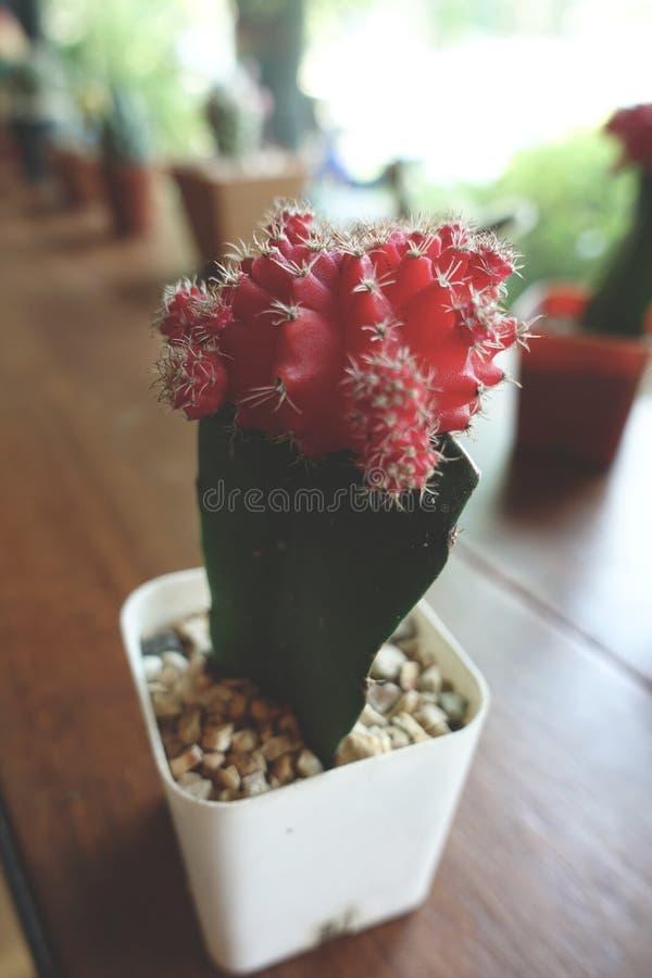Cactus et petites plantes dans l'utilisation de pot de fleurs pour la décoration de conception intérieure dans le café de café image stock