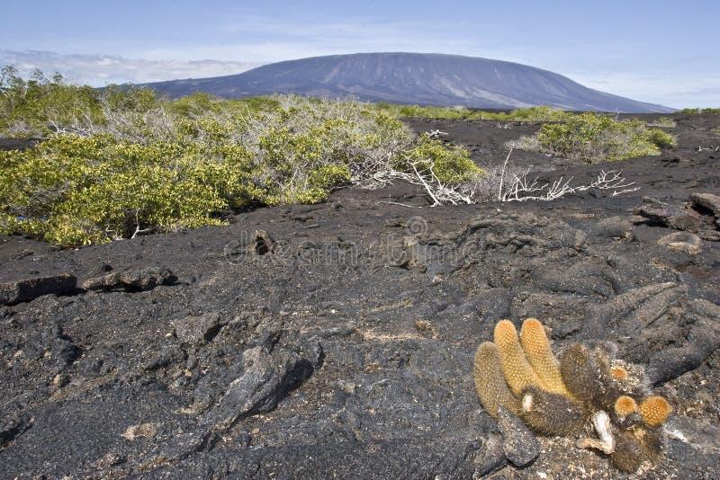 Cactus et volcan de lave photo libre de droits