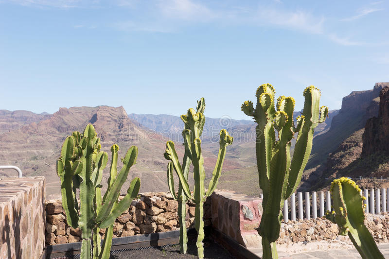 Cactus Euphorbia canariensis in the foreground of the mountains stock image