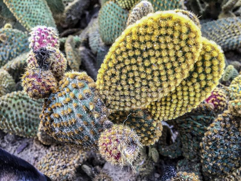 Cactus exótico en parque del balboa fotografía de archivo