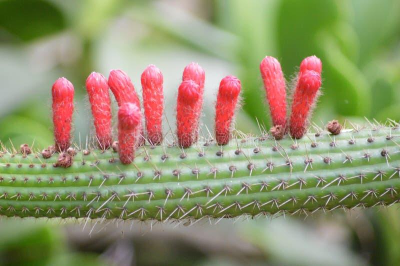 Cactus extraño fotos de archivo