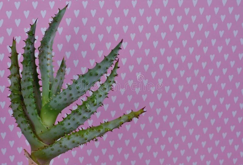 Cactus Fashion Set Design. Minimal fashion Still life. Trendy Bright Colors. stock photography