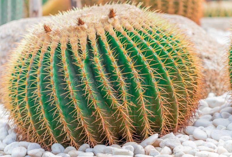 Cactus fermer image libre de droits