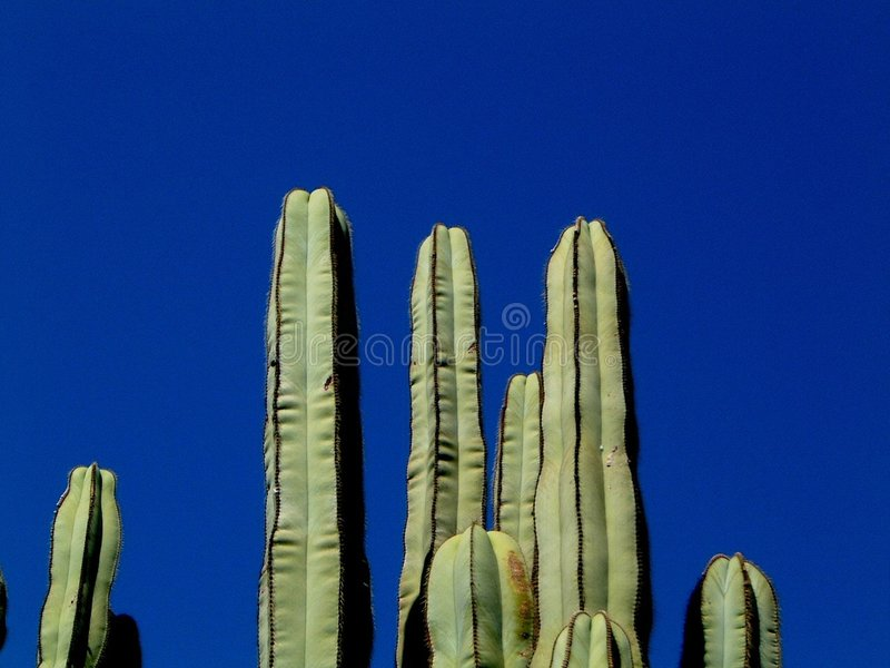 Download Cactus fields stock photo. Image of foto, plant, digital - 12148