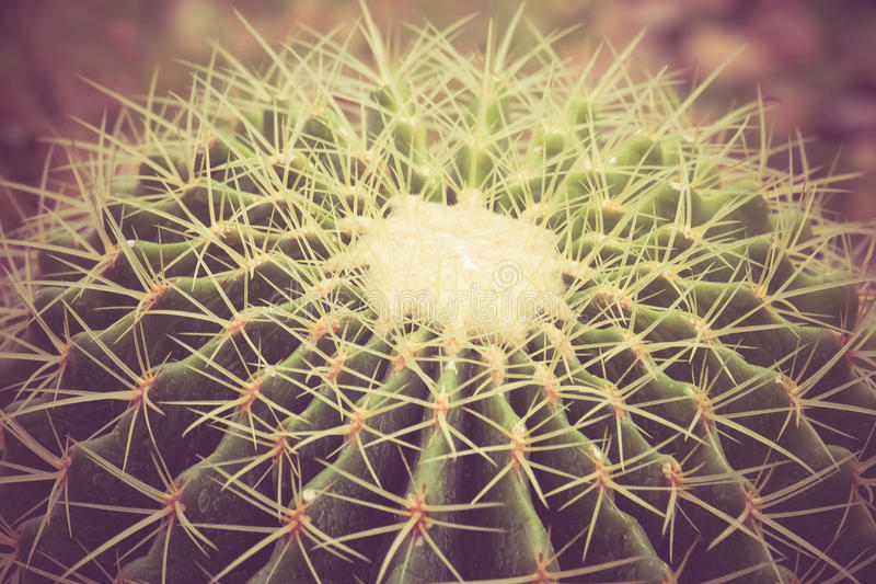 Cactus with filter effect retro vintage. Style stock photo