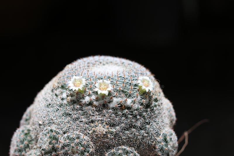 Cactus with flower blooming stock photos