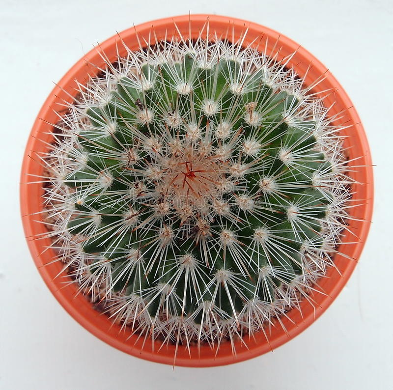 Free Cactus, From Above Stock Photos - 75753673