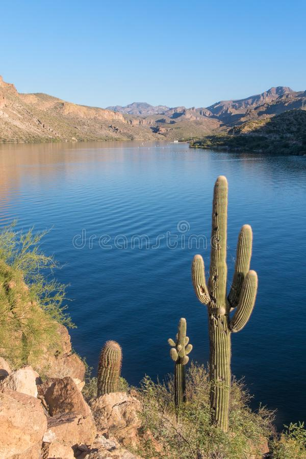 Cactus in front of a blue lake on historic Apache trail stock images