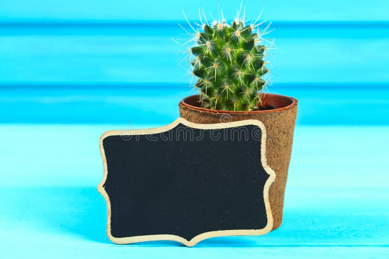 Cactus in front of classroom chalk board. Back to school concept with copy space. royalty free stock photos