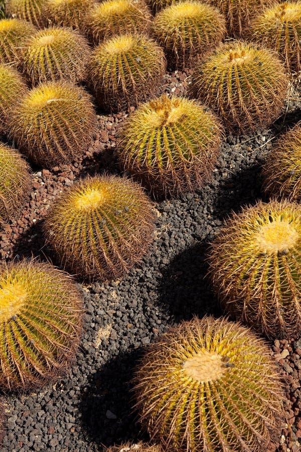 Download Cactus garden stock photo. Image of detail, environmental - 22525070
