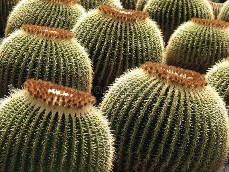 Cactus Garden royalty free stock photos