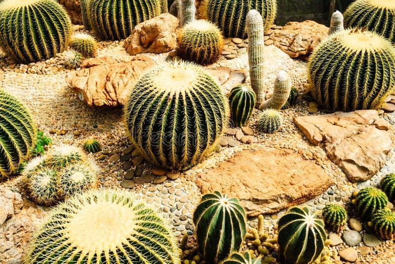 Cactus garden stock photos