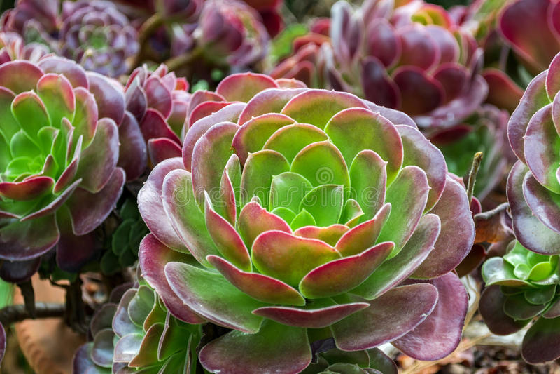Cactus garden in the Lloret de mar, Costa Brava, Catalonia, Spain. royalty free stock photo