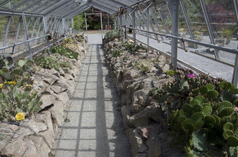 Cactus garden in UBC botanical garden. UBC botanical garden is in the University of British Columbia Vancouver Canada stock photos