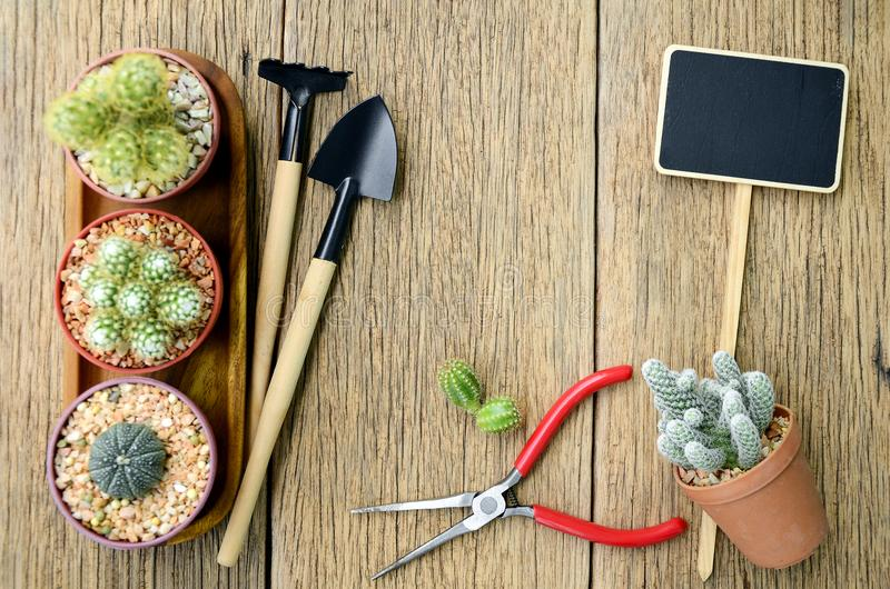 Cactus and gardening tools on wood background. stock photography