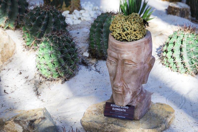 Cactus gelijkend op menselijke elongata cristata van hersenenmammillaria royalty-vrije stock afbeelding