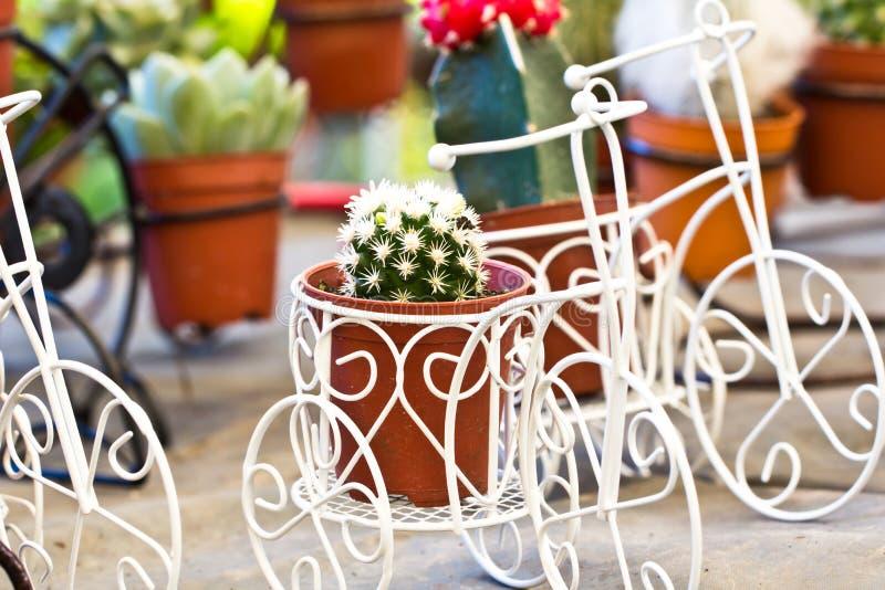 cactus in giardino fotografia stock