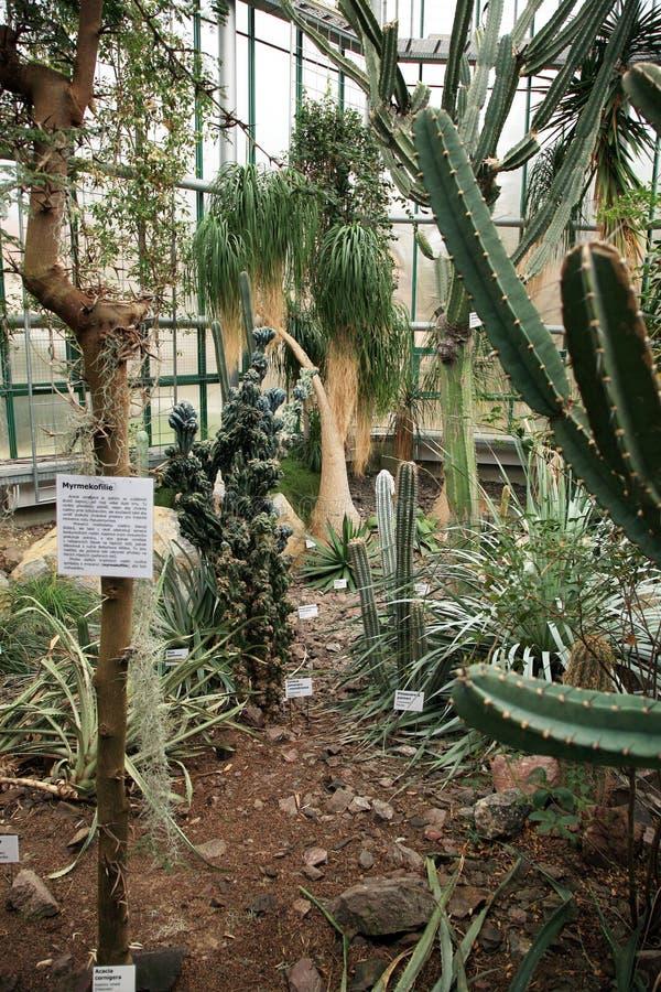 Cactus in giardino di inverno fotografia stock immagine - Giardino di inverno ...