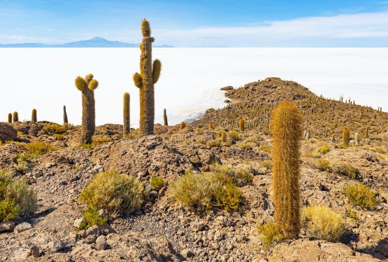 Cactus gigante nel piano del sale di Uyuni, Bolivia dell'Atacama immagine stock